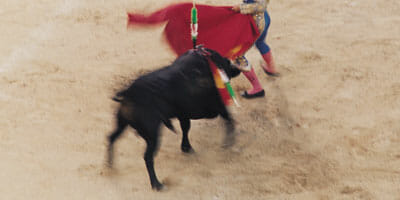 bullfight-WEB