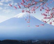 Mt. fuji and cherry blossom at lake kawaguchikoMt. fuji and cherry blossom at lake kawaguchiko